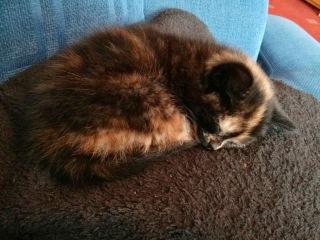 Peach The Kitten sleeping